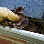 Fall cleanup - removing the leafs from the gutter.